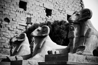 Rams at Karnak