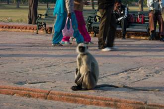 10-India-