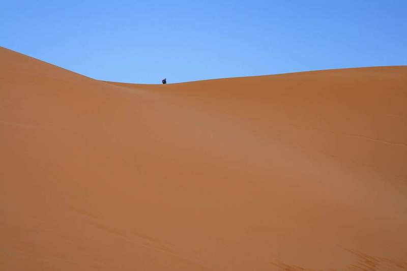 The Great Dune