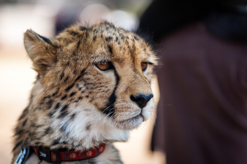 Cheetah Conservancy