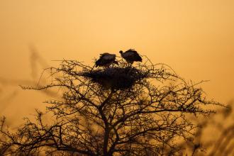 Nesting Vultures