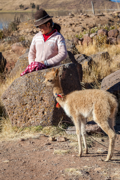 Girl & Baby Vicuna
