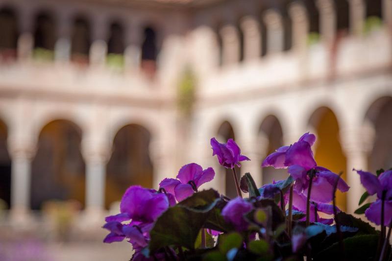 Cloister Flowers