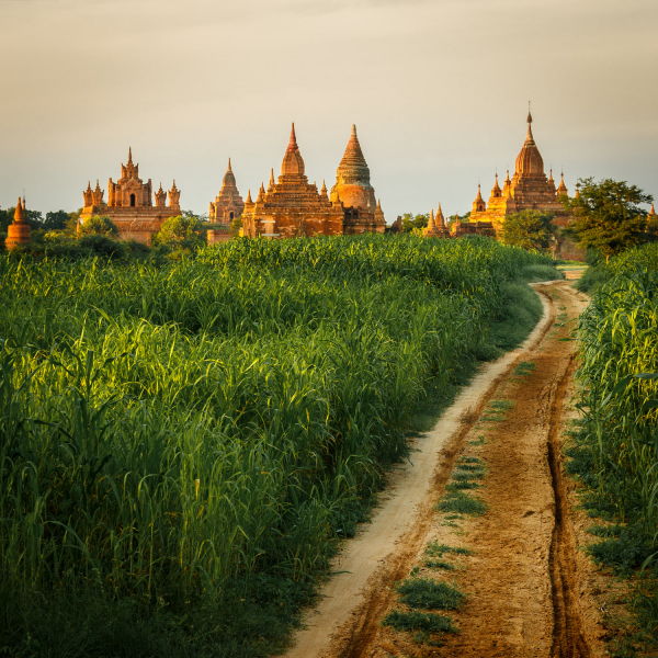 Road to the Temples