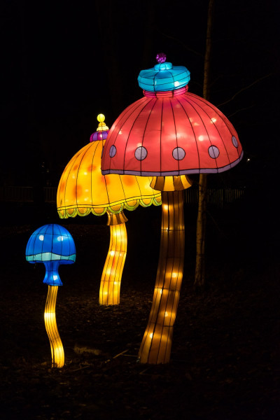 Trippy Mushrooms